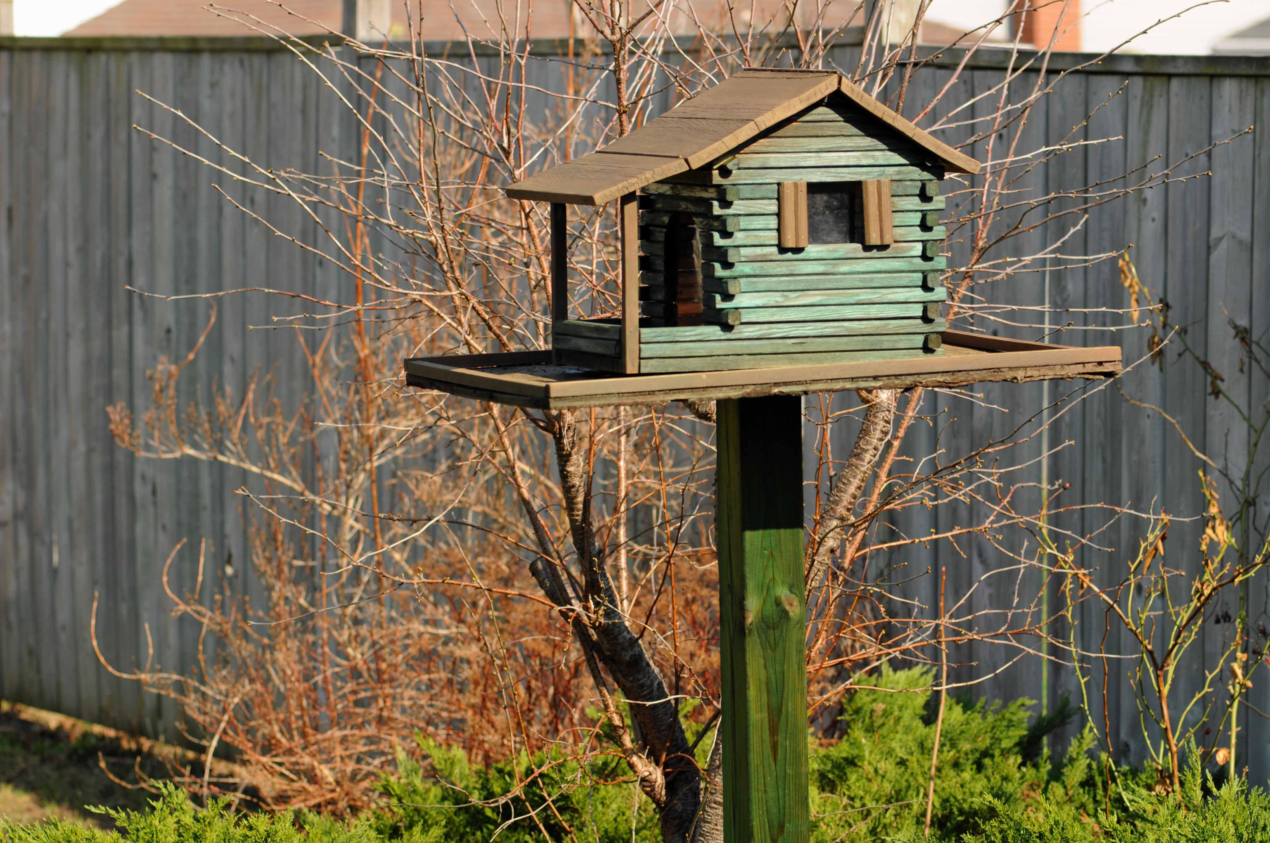 Bird feeder | Living Life in Glorious Colour